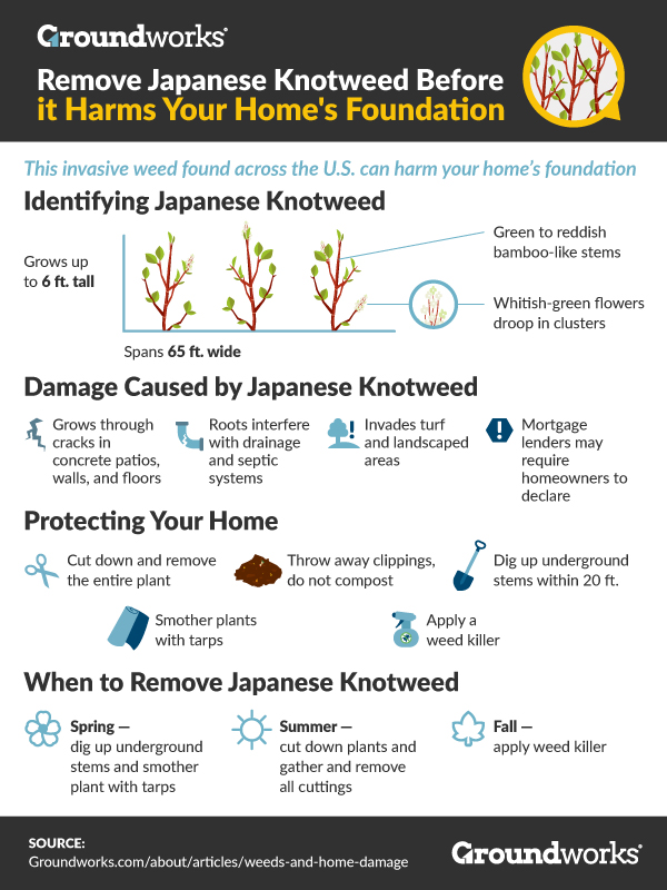 Remove Japanese Knotweed Before it Harms Your Home's Foundation